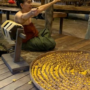 This woman Is unwinding the cocoon of a silk worm to make silk threads that use their garments.