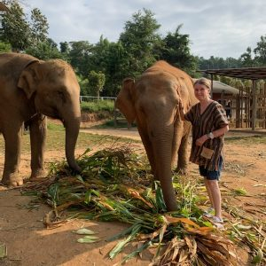 Another day that we played hooky form the group and went to an elephant refuge camp.  Kind of like a retirement home for elephants.  All they do is get fed and bathed and pampered.