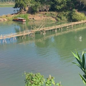 This is a bridge made out of only bamboo.